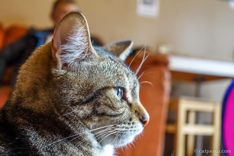Ceritanya lagi kenalan sama kucing di Melbourne cat cafe