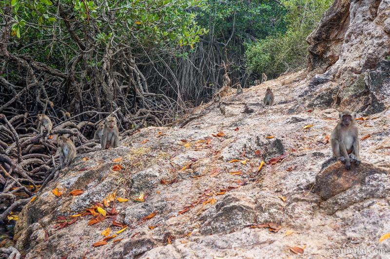 Gak ada buaya, adanya monyet di Loh Buaya, Pulau Rinca