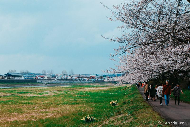 Kalau ke Jepang, jangan lupa mampir ke Kitakami Tensochi Park ya!