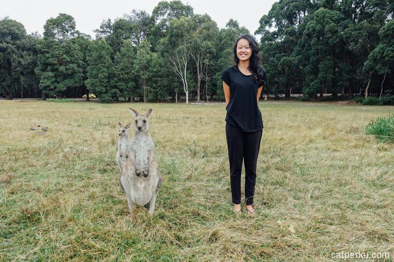 Kanguru dan temannya kanguru :v