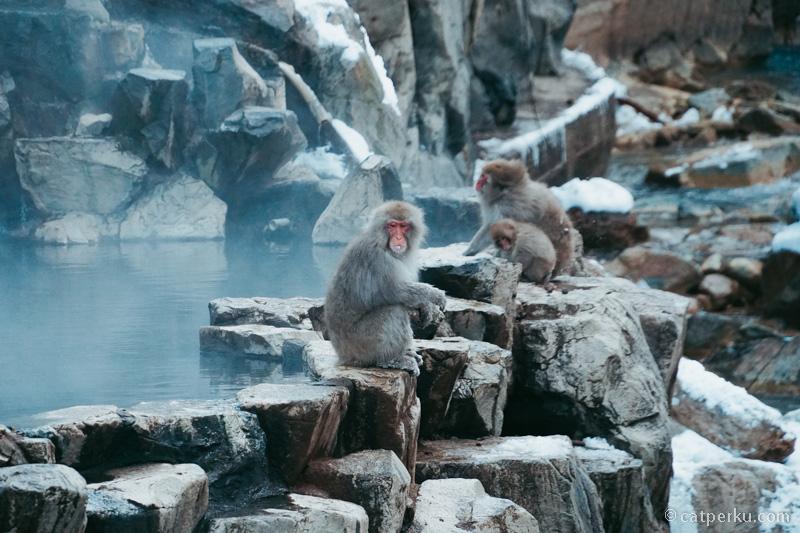 Karena suhu tak terlalu dingin, jadi tidak terlalu banyak monyet disini. Kalau lagi dingin banget, katanya banyak yang berkumpul disini
