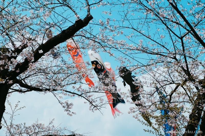 "<a title=""Keterangan koinobori"" href=""http://en.wikipedia.org/wiki/Koinobori"" target=""_blank"" rel=""noopener"">Koinobori</a> dan Bunga Sakura, pasangan yang cocok deh :D"