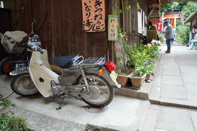 Lihat apa yang saya temukan di Fushimi Inari.