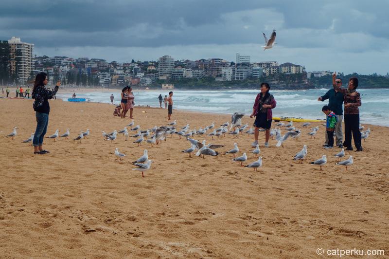 Manly Beach, bisa main ke pantai sekaligus bersantai di cafe