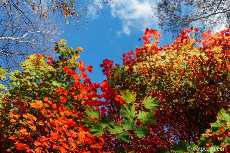 Mejikuhibiniu~ love this autumn colors!