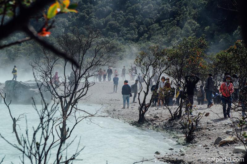 Mengintip Kawah Putih Ciwidey yang dikelilingi oleh hutan Cantigi