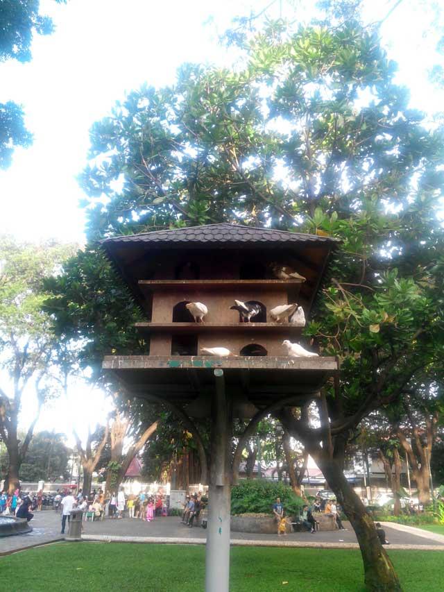 Merpati yang menghibur hati di Taman Suropati