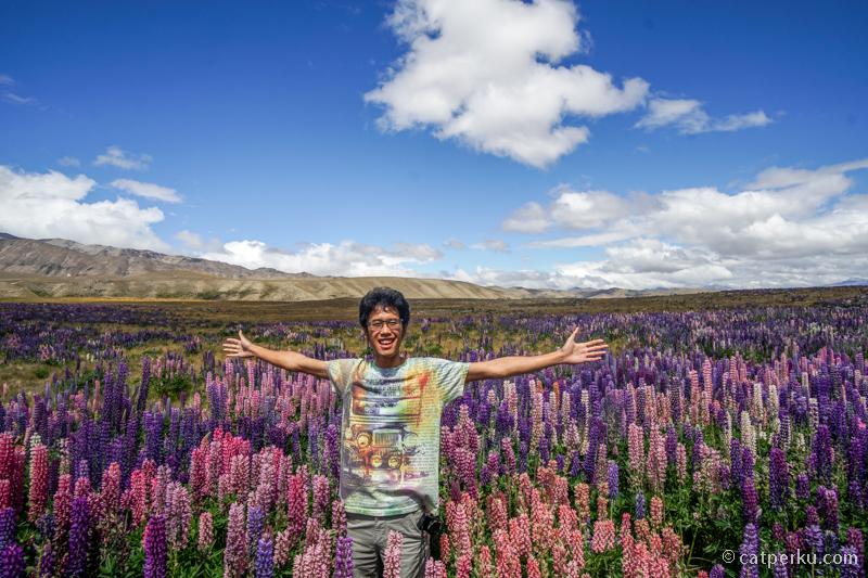Nggak ada dalam rencana, tapi padang Bunga Lupin ini adalah kejutan menyenangkan lho!