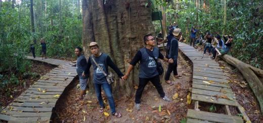 Pelukan Yang Tak Sampai, Kayu Ulin Raksasa Taman Nasional Kutai
