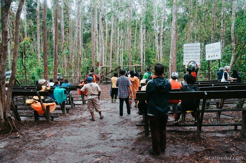 Pengunjung Camp Lackey pada antusias melihat Orangutan lagi makan
