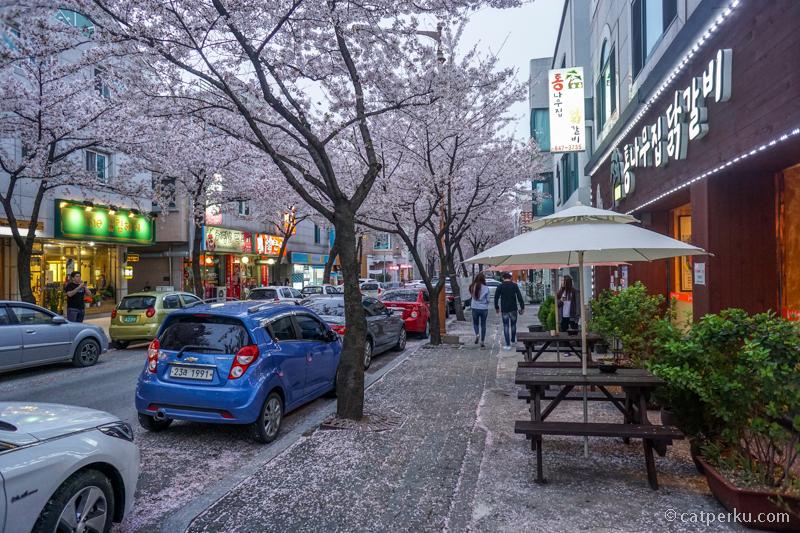 Sakura mulai berguguran, padahal baru awal April lho