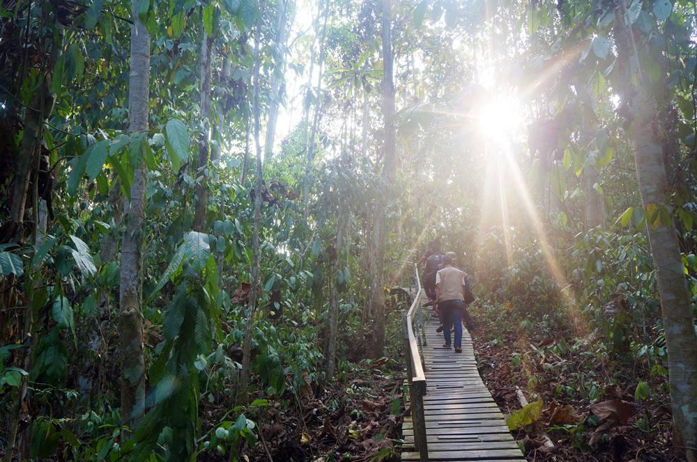 Salah satu jalur menuju lokasi Kayu Ulin raksasa di Taman Nasional Kutai