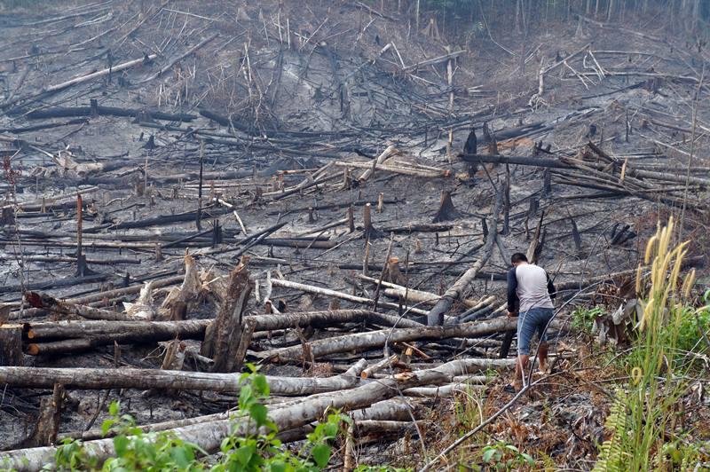 Wajah asli hutan Borneo...