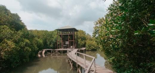 Wisata Trekking Mangrove Di Pulau Bali Selatan