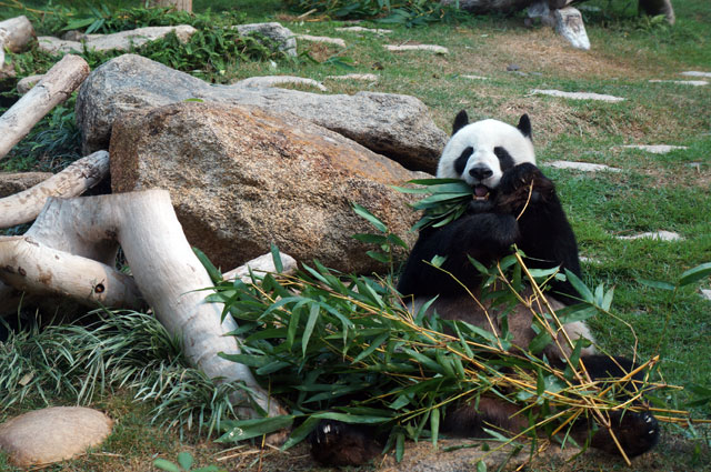 Hello Mr Panda!