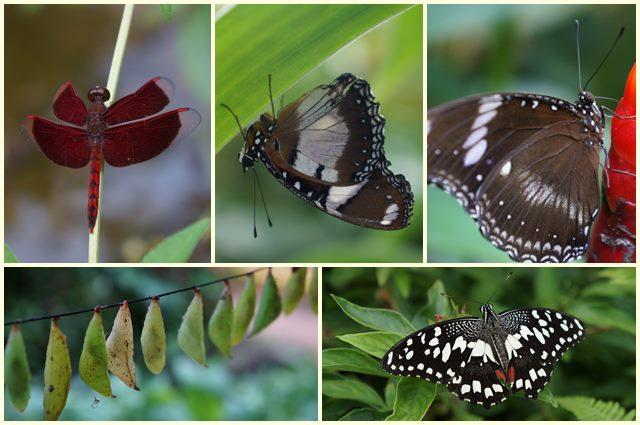 Kupu - kupu cakep seperti ini maksud saya, bukan kupu - kupu malam ya :P
