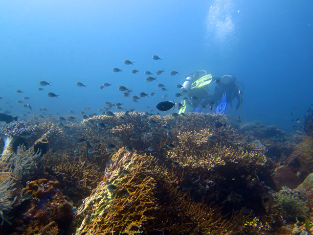 Pemandangan bawah laut Tomia yang seperti ini bikin nagih scuba diving disini  >,<!! foto by @marischkaprue
