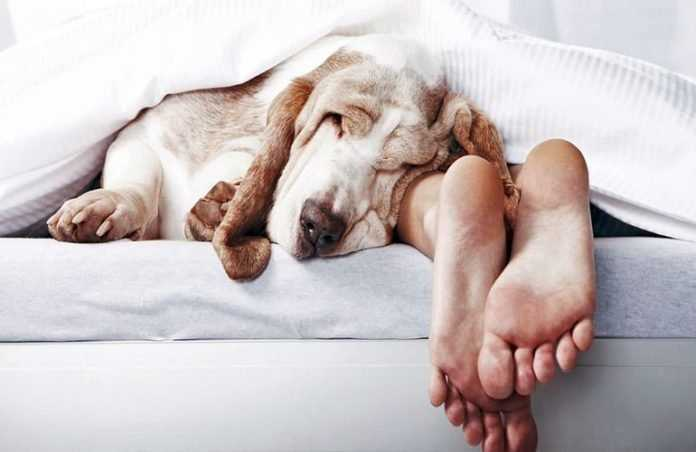 Estudio explica por qué es mejor dormir con tu perro que con tu pareja