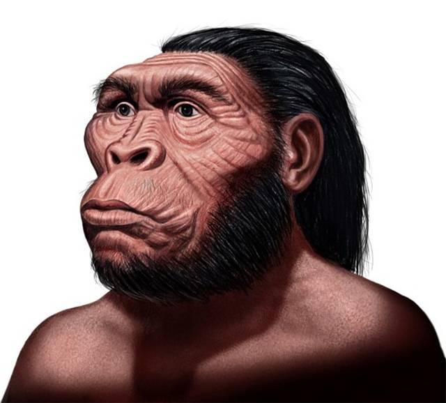 'Australopithecus anamensis'. Vivió hace 4,1 millones de años. Su cejas eran prominentes, como una visera. Su mentón, hundido remarcaba un «bozal». Medía entre 1 y 1,25 metro.