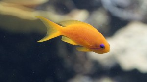 fish-428706_640