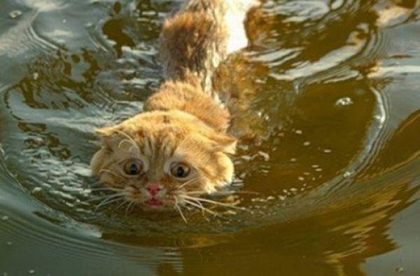 veľké chlpaté mačička klipy príťažlivé nahé babes Foto