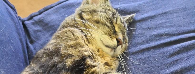 Katze liegt entspannt auf einem Sofa und schläft - Katzen, Katzenberatung, Probleme mit Katze, Katzenpsychologe, Katzenverhaltensberatung in Berlin