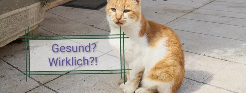 eine rot-weiße Katze sitzt vor Terrakotta-Töpfen und sieht krank aus - Katzenberatung, Katzenverhaltensberatung, Katzenpsychologe in Berlin, Katze macht neben Katzenklo, Markieren, Katzen verstehen sich nicht, aggressive Katze
