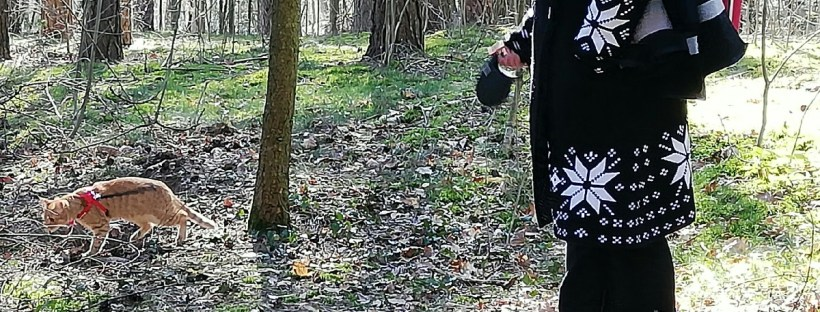 Katze ist im Wald an der Leine - Spaziergang mit Katze, Katzenberatung, Katzenpsychologin, Katzenverhaltensberatung Berlin, stubenrein, unsauber, verstehen sich nicht, greift an