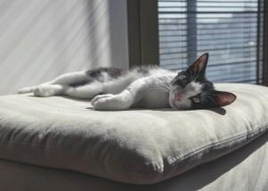 Katze liegt ausgestreckt einem Kissen - Katzenpsychologin, Katzenberatung, Katzenverhaltensberatung berlin, Katzenexpertin, Hilfe Katze kratzt unsauber aggressiv