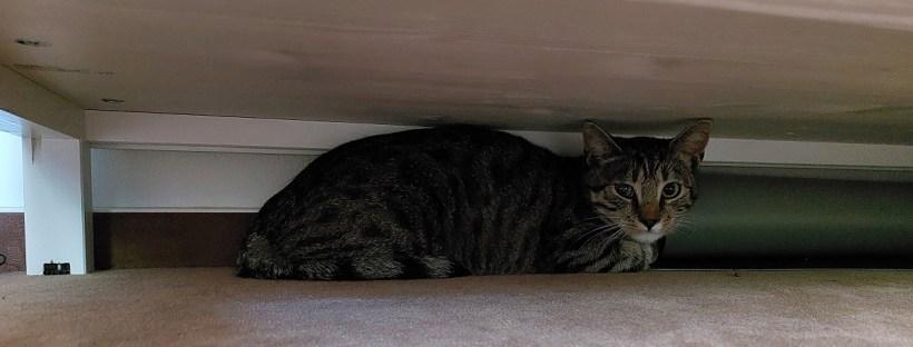 Getigerte Katze sitzt unter einem Schrank - Katzenberatung, Katzenverhaltensberatung, Katzenpsychologe, Katzenpsychologin, Katzentrainer, Katzentrainerin, Katzencoach, Berlin, Angst, ängstliche Katze