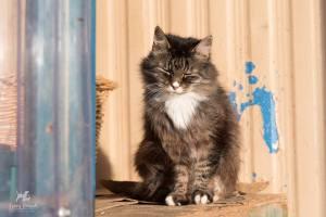 Debbie, RAPS Cat Sanctuary