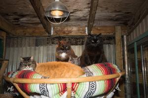 Debbie sharing the papasan, RAPS Cat Sanctuary