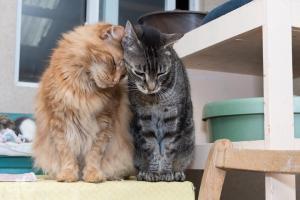 Daniel & Cloverleaf, RAPS Cat Sanctuary