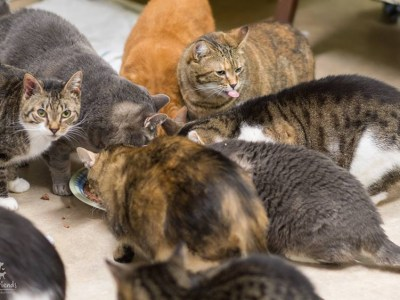 cat sanctuary admission fee