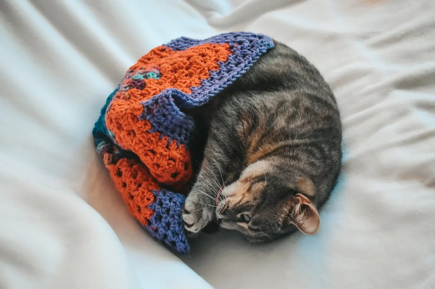 Pet Blankets For Cats Critter Crafting Cat Mats Cats Coffee