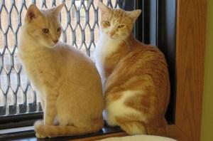 Nelson & Marigold