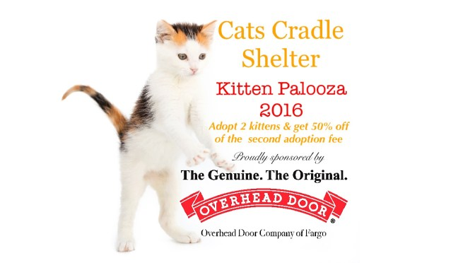 Kitten Palooza – Come One, Come All!