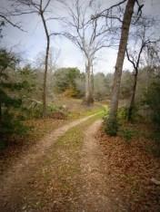 Winding trail.