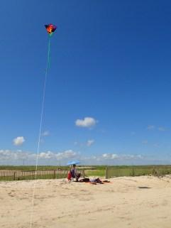 t-rex kite