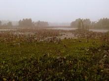 Rain at Elm Lake