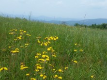 Flowery Meadows