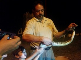 Ya know, just petting rattlesnakes. Thanks, Rudy!