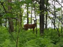 Plus Bambi!