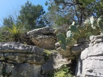 Rocky trail with cactus.