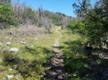Trail winding through yellow wildflowers.