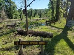 Flooded Gorman Spring Trail.
