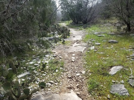 Rocky trail with cactus on one side and grass on the other.
