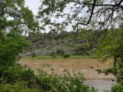 Glimpse of Colorado River through the trees with limestone bluffs on the opposite bank.