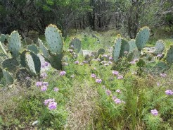 Cactus in the background with wildflowers in the foreground.