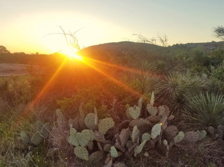 Sunrise with cactus with Enchanted Rock in the background.